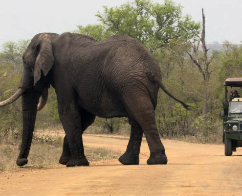 Kruger Game Drive with Kruger Park tours