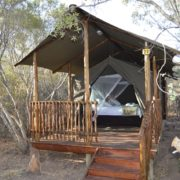 Luxury Tented Camp Safari with Kruger Park Tours
