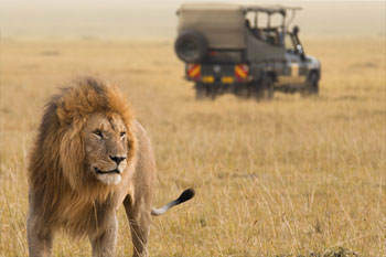 Kruger National Park safari Drive with Kruger Park Tours