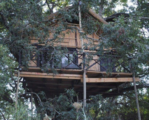 Lodge Treehouse Safari