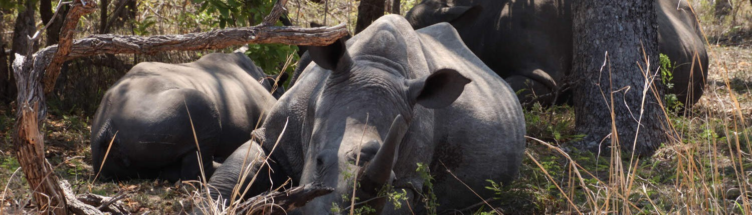 See Rhino on a Kruger Safari
