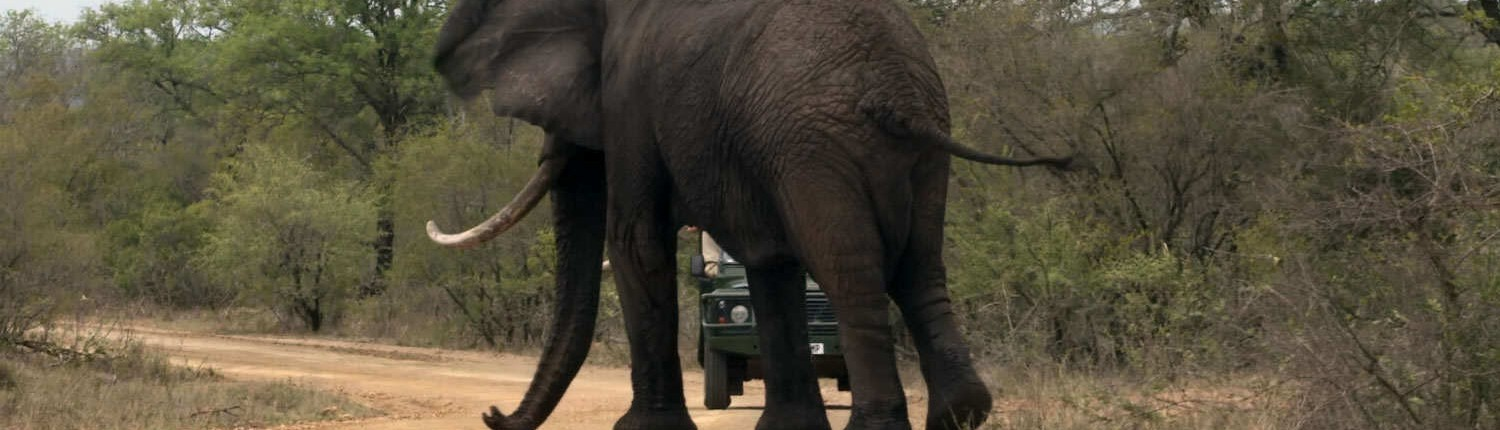Elephant and Game Drive Vehicle - Kruger Park Safari