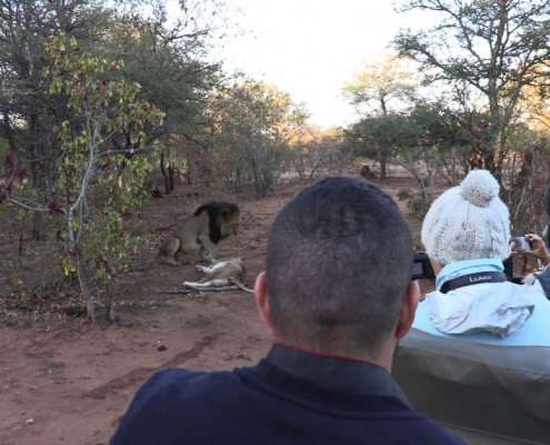 Luxury Tented Camp Game Drives - African Safari Guests filming lions at a Private Game Reserve