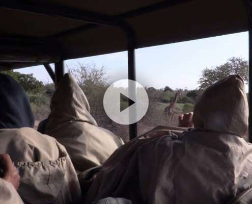 Kruger Safari in a Hut Itinerary Video