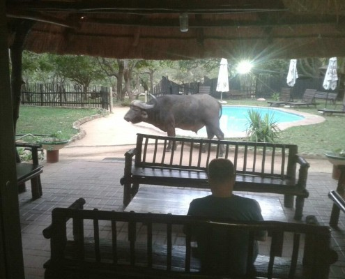 Have meals and view African Wildlife