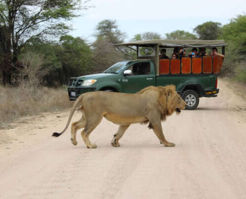 Greater Kruger Game Drive