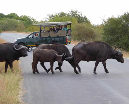 Big 5 Game Drive in an open-sided 4x4 Vehicle